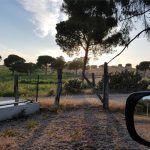 seville brave bulls farm