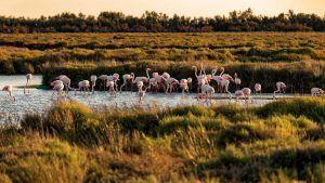 flamingos donana national park trip from seville