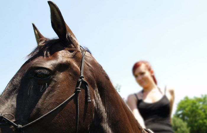 seville horses riding tour