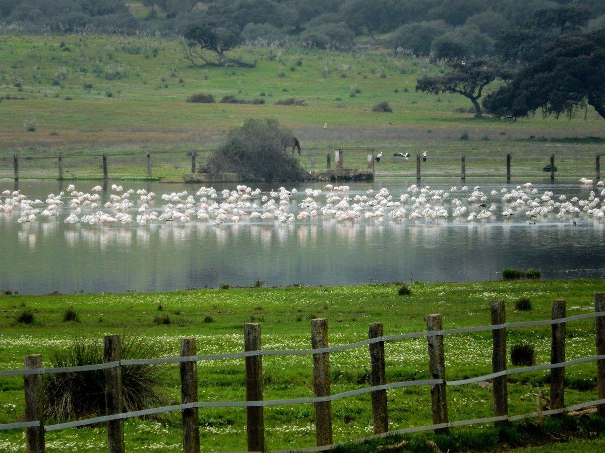 birdwatching seville spain dehesa de abajo